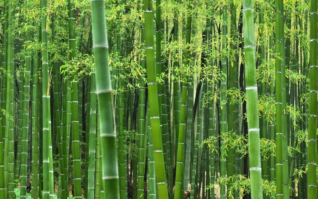 Bamboo and Creation of Mankind.